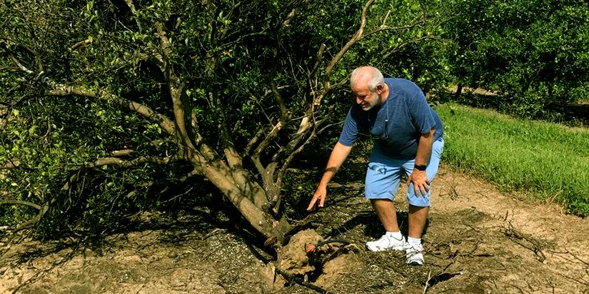 Furacão Irma provoca a queda de árvores na flórida. Foto Arlindo de Dalvo Filho